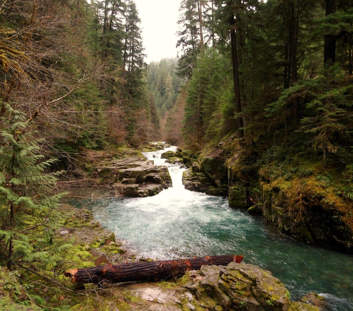 Brice Creek near Cottage Grove (Robin Marshburn/CC by 2.0)