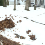 Leaf pickup issues continue in St. Joseph County