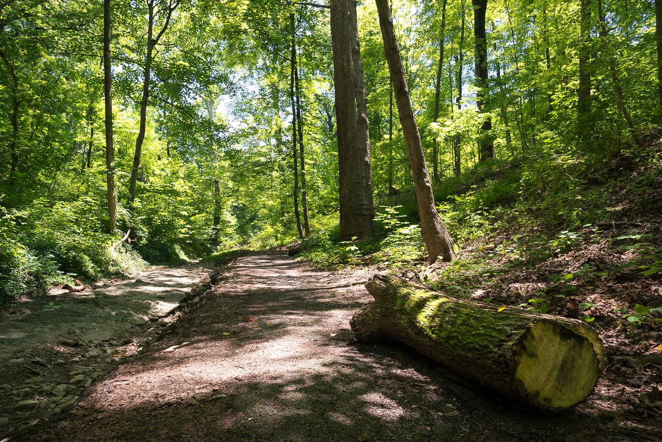 TRAILS AND HIKING: Cincinnati's parks feature 65 miles of hiking trails going through old growth forests and trundling woodlands, past shady bowers and grassy furrows, and across trundling hills and surging streams. / Image: Phil Armstrong