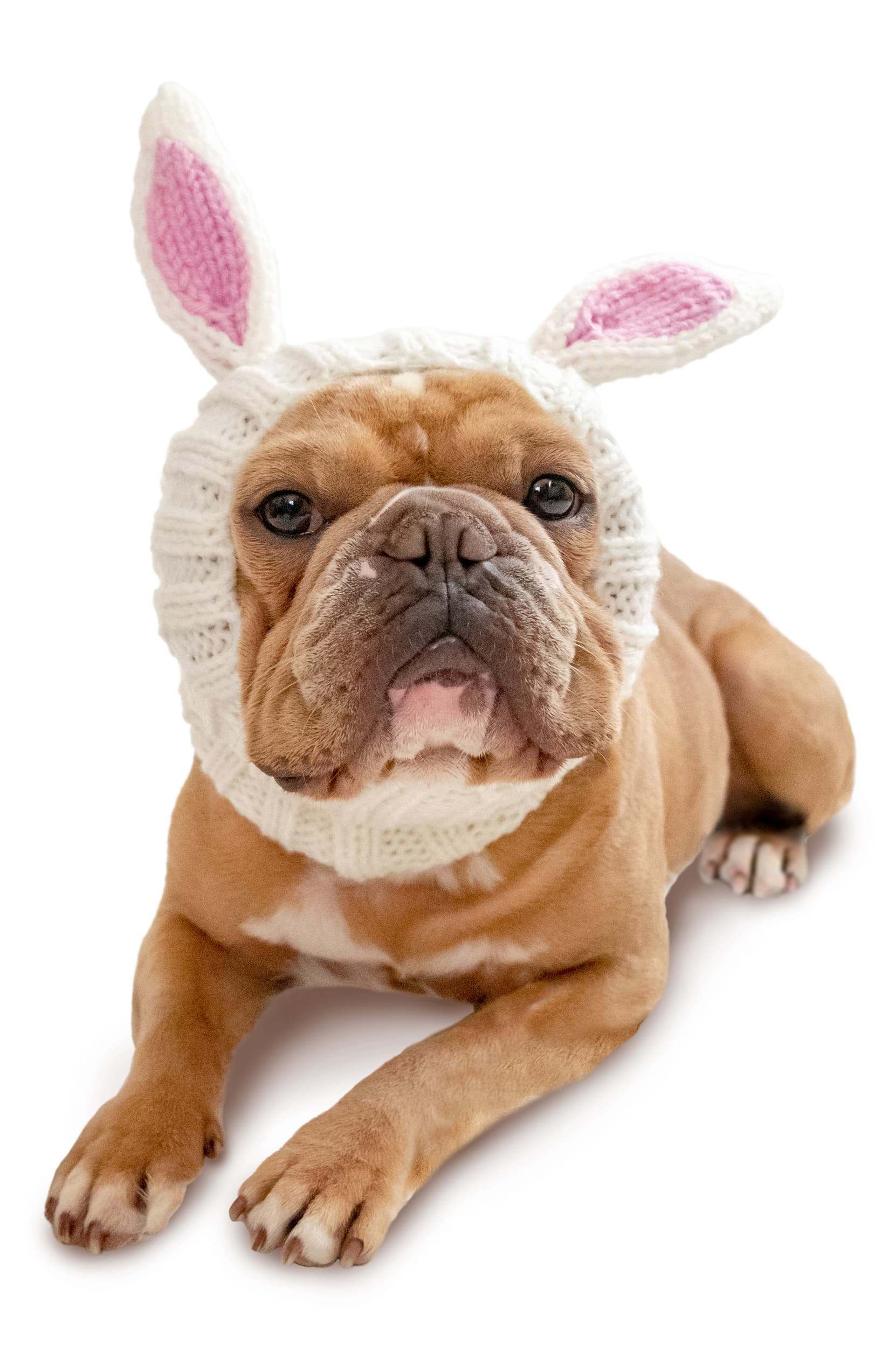"<a  href=""https://shop.nordstrom.com/s/zoo-snoods-bunny-rabbit-crochet-dog-snood/5379036?origin=keywordsearch-personalizedsort&breadcrumb=Home%2FAll%20Results&color=white"" target=""_blank"" title=""https://shop.nordstrom.com/s/zoo-snoods-bunny-rabbit-crochet-dog-snood/5379036?origin=keywordsearch-personalizedsort&breadcrumb=Home%2FAll%20Results&color=white"">Bunny Rabbit Crochet Dog Snood from ZOO SNOODS ($15-$25)</a>{&nbsp;}Keep floppy pup ears snuggly warm on cold-weather walks—or just keep 'em from dangling into a food bowl at dinnertime—with this adorable crocheted snood handmade with perky bunny ears.{&nbsp;}<a  href=""https://sinclairstoryline.com/Bunny%20Rabbit%20Crochet%20Dog%20Snood%20from%20ZOO%20SNOODS%20($15-$25)%20Keep%20floppy%20pup%20ears%20snuggly%20warm%20on%20cold-weather%20walks%E2%80%94or%20just%20keep%20'em%20from%20dangling%20into%20a%20food%20bowl%20at%20dinnertime%E2%80%94with%20this%20adorable%20crocheted%20snood%20handmade%20with%20perky%20bunny%20ears.%20(Image:%20Nordstrom)"" target=""_blank"" title=""Bunny Rabbit Crochet Dog Snood from ZOO SNOODS ($15-$25) Keep floppy pup ears snuggly warm on cold-weather walks—or just keep 'em from dangling into a food bowl at dinnertime—with this adorable crocheted snood handmade with perky bunny ears. (Image: Nordstrom)"">(Image: Nordstrom){&nbsp;}</a>"