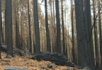 Burnt timber lands 2.JPG