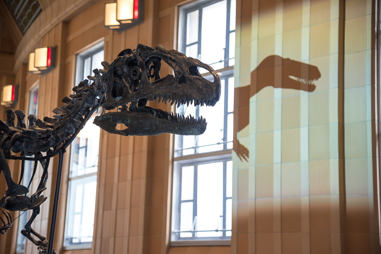 Five new skeletons that have never been exhibited before now grace Dinosaur Hall. The Hall also features an interactive world map that shows the evolution of Earth's continents, as well as Jurassic-era fossils. / Image: Phil Armstrong, Cincinnati Refined // Published: 11.18.18