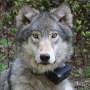 3 lawmakers hit with ethics complaint over wolf bill