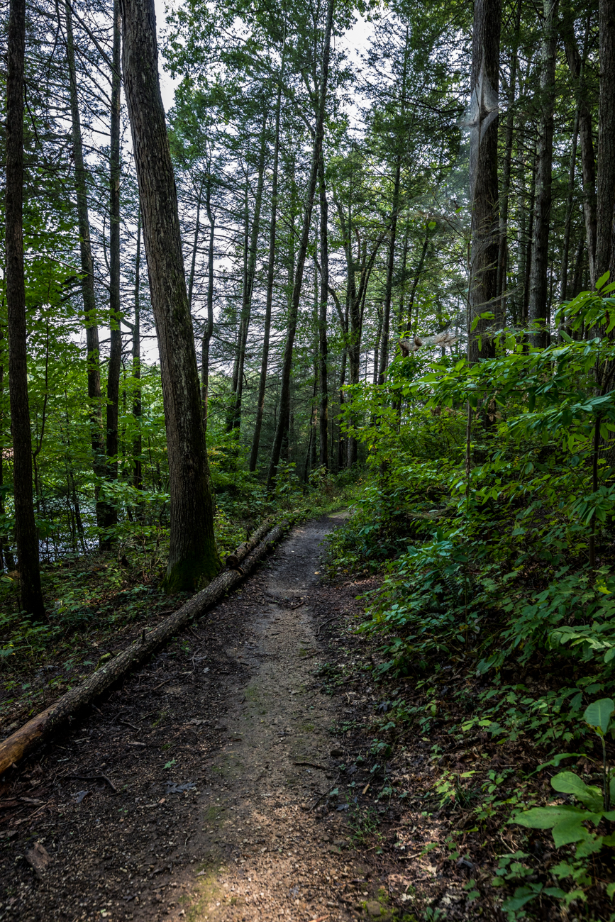 Other than camping, visitors can partake in activities like swimming, power boating, canoeing, fishing, and hiking. The Sheltowee Trace Trail is 4.2 miles long and leads hikers from the campground to the Laurel River Dam. / Image: Catherine Viox // Published: 10.13.20